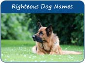 Righteous Dog Names