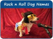 Rock n Roll Dog Names