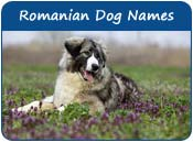 Romanian Dog Names