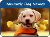 Romantic Dog Names