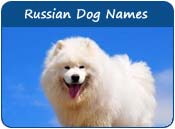 Russian Dog Names