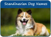 Scandinavian Dog Names