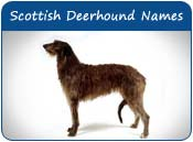 Scottish Deerhound Dog Names