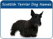 Scottish Terrier Dog Names