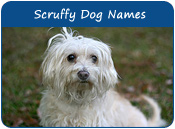 Scruffy Dog Names