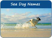 Sea Dog Names