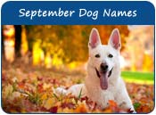 September Dog Names
