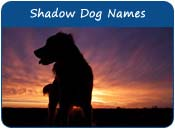 Shadow Dog Names