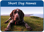 Short Dog Names