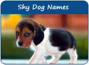 Shy Dog Names