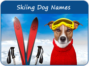 Skiing Dog Names