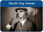 Sleuth Dog Names