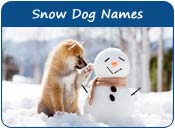Snow Dog Names