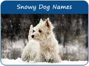 Snowy Dog Names