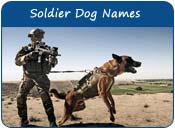 Soldier Dog Names