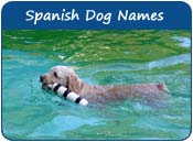 Spanish Dog Names