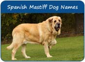 Spanish Mastiff Dog Names For Puppies