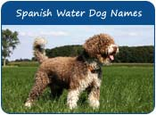 Spanish Water Dog Names