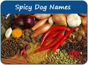 Spicy Dog Names