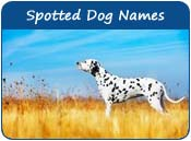 Spotted Dog Names