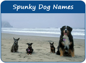 Spunky Dog Names