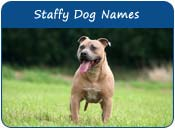Staffy Names