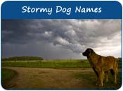 Stormy Dog Names
