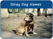Stray Dog Names