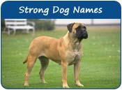 Strong Dog Names