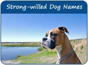 Strong-willed Dog Names