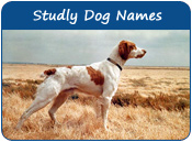 Studly Dog Names
