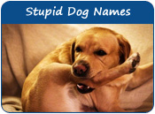 Stupid Dog Names