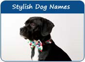 Stylish Dog Names