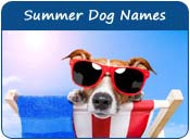Summer Dog Names