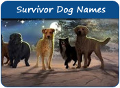 Survivor Dog Names