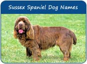 Sussex Spaniel Dog Names