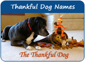 Thankful Dog Names