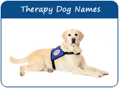 Therapy Dog Names