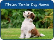 Tibetan Terrier Dog Names
