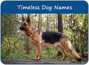 Timeless Dog Names