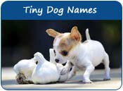 Tiny Dog Names