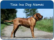 Tosa Inu Dog Names