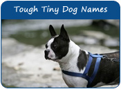 Tough Names For Tiny Dogs