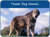 Tower Dog Names