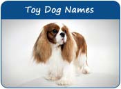 Toy Dog Names