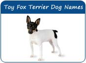 Toy Fox Terrier Dog Names
