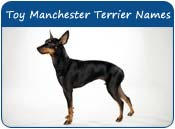 Toy Manchester Terrier Dog Names