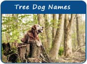 Tree Dog Names