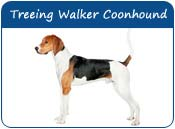 Treeing Walker Coonhound Dog Names