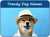 Trendy Dog Names